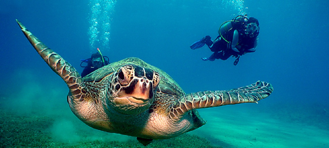 Turtle-Divers-